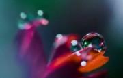 微距摄影鲜花与水珠壁纸 壁纸10 微距摄影鲜花与水珠壁 植物壁纸