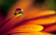 微距摄影鲜花与水珠壁纸 壁纸14 微距摄影鲜花与水珠壁 植物壁纸