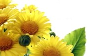 向日葵 葵花 宽屏壁纸 壁纸13 向日葵 葵花 宽屏壁纸 植物壁纸