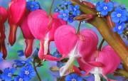 鲜花高清晰桌面壁纸 鲜花高清晰桌面壁纸 植物壁纸