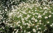 鲜花特写 鲜花特写 植物壁纸