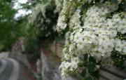 鲜艳夺目花朵高清壁纸 植物壁纸