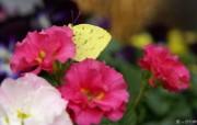 鲜艳夺目花朵高清壁纸 鲜艳夺目花朵高清壁纸 植物壁纸