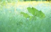 夏日气息 清新绿叶高清壁纸 夏日气息清新绿叶高清壁纸 植物壁纸