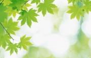 夏日气息 阳光水滴 清新绿叶高清壁纸 壁纸1 夏日气息:阳光水滴 植物壁纸