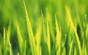 夏日气息 阳光水滴 清新绿叶高清壁纸 壁纸4 夏日气息:阳光水滴 植物壁纸