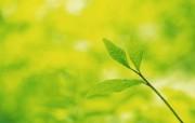 夏日气息 阳光水滴 清新绿叶高清壁纸 壁纸5 夏日气息:阳光水滴 植物壁纸