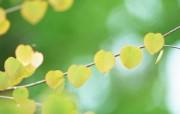 夏日气息 阳光水滴 清新绿叶高清壁纸 壁纸8 夏日气息:阳光水滴 植物壁纸