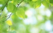 夏日气息 阳光水滴 清新绿叶高清壁纸 壁纸9 夏日气息:阳光水滴 植物壁纸