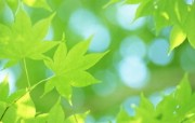 夏日气息 阳光水滴 清新绿叶高清壁纸 壁纸10 夏日气息:阳光水滴 植物壁纸