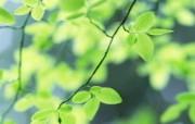 夏日气息 阳光水滴 清新绿叶高清壁纸 壁纸12 夏日气息:阳光水滴 植物壁纸