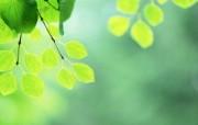夏日气息 阳光水滴 清新绿叶高清壁纸 壁纸13 夏日气息:阳光水滴 植物壁纸
