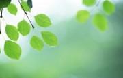 夏日气息 阳光水滴 清新绿叶高清壁纸 壁纸14 夏日气息:阳光水滴 植物壁纸