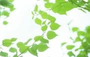 夏日气息 阳光水滴 清新绿叶高清壁纸 壁纸15 夏日气息:阳光水滴 植物壁纸