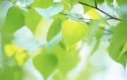 夏日气息 阳光水滴 清新绿叶高清壁纸 壁纸17 夏日气息:阳光水滴 植物壁纸