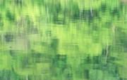 夏日气息 阳光水滴 清新绿叶高清壁纸 壁纸20 夏日气息:阳光水滴 植物壁纸