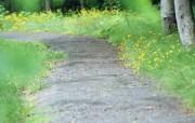夏日气息 阳光水滴 清新绿叶高清壁纸 壁纸21 夏日气息:阳光水滴 植物壁纸