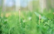 夏日气息 阳光水滴 清新绿叶高清壁纸 壁纸23 夏日气息:阳光水滴 植物壁纸