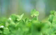 夏日气息 阳光水滴 清新绿叶高清壁纸 壁纸24 夏日气息:阳光水滴 植物壁纸