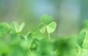 夏日气息 阳光水滴 清新绿叶高清壁纸 壁纸25 夏日气息:阳光水滴 植物壁纸