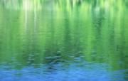 夏日气息 阳光水滴 清新绿叶高清壁纸 壁纸26 夏日气息:阳光水滴 植物壁纸