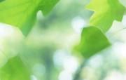 夏日气息 阳光水滴 清新绿叶高清壁纸 壁纸27 夏日气息:阳光水滴 植物壁纸