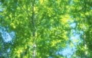 夏日气息 阳光水滴 清新绿叶高清壁纸 壁纸37 夏日气息:阳光水滴 植物壁纸
