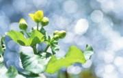 夏日气息 阳光水滴 清新绿叶高清壁纸 壁纸40 夏日气息:阳光水滴 植物壁纸