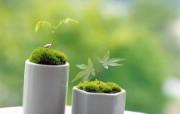 新芽嫩叶高清绿色植物壁纸 三 壁纸4 新芽嫩叶高清绿色植物 植物壁纸