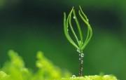 新芽嫩叶高清绿色植物壁纸 三 壁纸5 新芽嫩叶高清绿色植物 植物壁纸