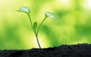 新芽嫩叶高清绿色植物壁纸 三 壁纸7 新芽嫩叶高清绿色植物 植物壁纸