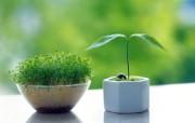 新芽嫩叶高清绿色植物壁纸 三 壁纸8 新芽嫩叶高清绿色植物 植物壁纸