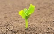 新芽嫩叶高清绿色植物壁纸 三 壁纸12 新芽嫩叶高清绿色植物 植物壁纸