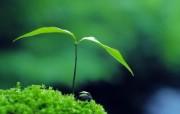 新芽嫩叶高清绿色植物壁纸 三 壁纸13 新芽嫩叶高清绿色植物 植物壁纸