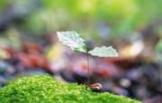 新芽嫩叶高清绿色植物壁纸 三 壁纸14 新芽嫩叶高清绿色植物 植物壁纸