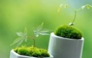 新芽嫩叶高清绿色植物壁纸 三 壁纸15 新芽嫩叶高清绿色植物 植物壁纸