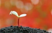 新芽嫩叶高清绿色植物壁纸 三 壁纸17 新芽嫩叶高清绿色植物 植物壁纸