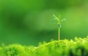 新芽嫩叶高清绿色植物壁纸 三 壁纸18 新芽嫩叶高清绿色植物 植物壁纸