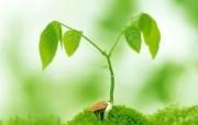 新芽嫩叶高清绿色植物壁纸 三 壁纸19 新芽嫩叶高清绿色植物 植物壁纸