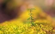 新芽嫩叶高清绿色植物壁纸 三 壁纸27 新芽嫩叶高清绿色植物 植物壁纸