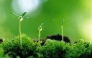 新芽嫩叶高清绿色植物壁纸 三 壁纸31 新芽嫩叶高清绿色植物 植物壁纸
