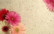 液晶宽屏鲜花壁纸上辑 植物壁纸