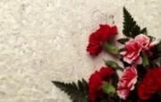 液晶宽屏鲜花壁纸下辑 植物壁纸