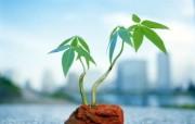 崭新的生命 新芽嫩叶宽屏壁纸 崭新的生命 新芽嫩叶宽屏壁纸 植物壁纸