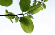 自然界第一辑壁纸 植物壁纸